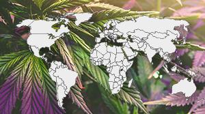 Где легализована марихуана?